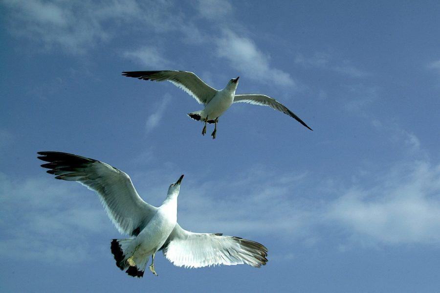 高く飛ぶ鳥